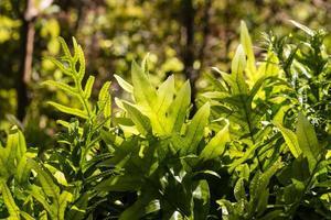 folhas de samambaia retroiluminadas