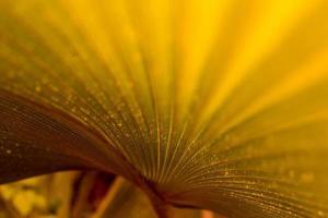 cores das folhas