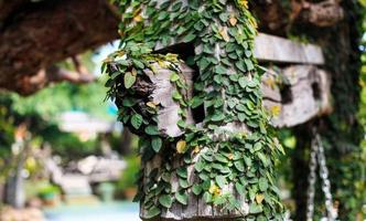 folhas em galho de árvore foto