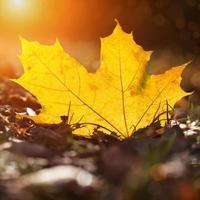 a folha amarela de outono repousa na terra em raios de sol