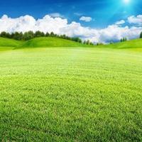 prado de verão. paisagem ambiental abstrata para seu projeto
