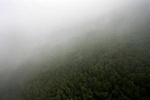 árvores no nevoeiro foto