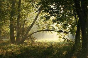 um arco de árvore com o sol brilhando