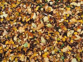 fundo de folhas no chão