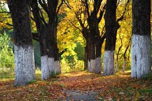 árvores de outono e beco