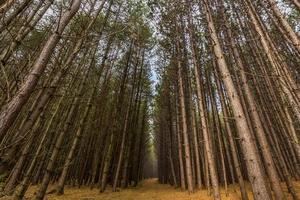 Dentro da floresta