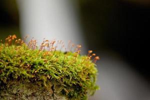 vegetação rasteira alpina