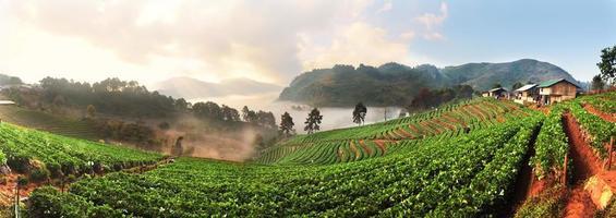 panorama da fazenda de morango em doi ang khang, chiang mai foto