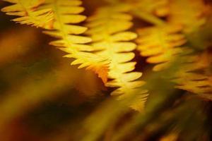 composição artística de outono tinta a óleo, samambaia amarela foto