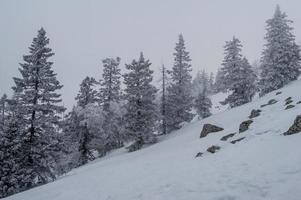 floresta coberta de neve nas encostas da montanha.