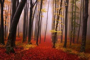 trilha de conto de fadas com folhas vermelhas na floresta enevoada foto