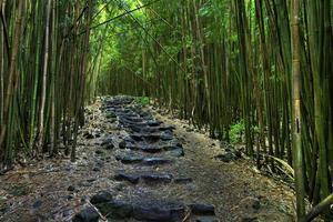 uma rocha negra alinhada com um caminho através de uma floresta densa