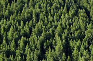 vista aérea de uma floresta cheia de palmeiras