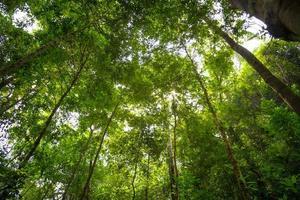 vista de baixo ângulo da floresta para o céu