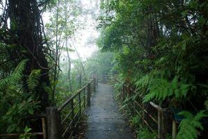 caminhada pela natureza na floresta tropical e cobertura de nuvens.