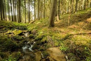 cai no pequeno rio da montanha em uma floresta