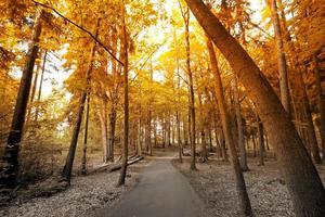 outono no parque.