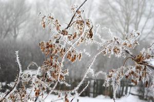 galho de árvore coberto de geada foto