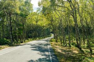 bétula road.plateau drive. foto