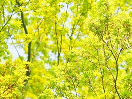 bordo verde fresco foto