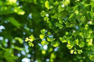 tiro do verde fresco