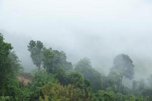 árvores cobertas de nevoeiro