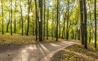 caminho na floresta de outono. parque com árvores amarelas