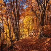 árvores coloridas no outono