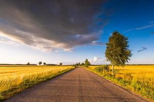 paisagem rural de verão com estrada de asfalto velha