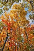 cores do outono no dossel