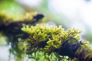 folha em fundo de musgo