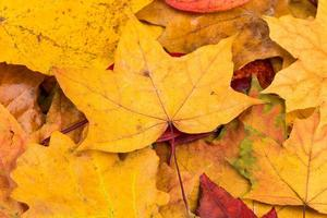 outono deixa o fundo foto