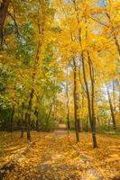 outono maple park com folhas amarelas