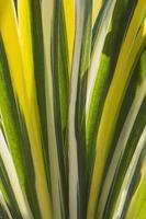 textura de grama colorida