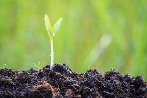 jovem planta verde no solo