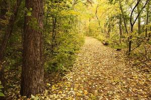 folhas douradas de outono e trilha