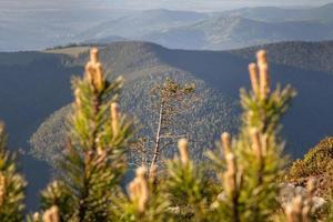 floresta de pinheiros nas montanhas em um bom dia foto