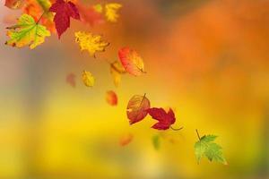 lindo fundo de outono foto