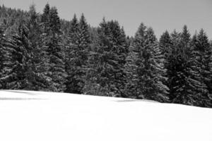 paisagem montanhosa com neve e árvores no inverno foto