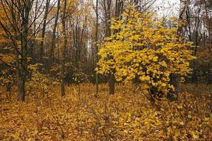 a madeira de outono foto