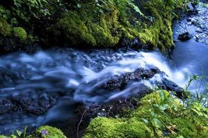 riacho e pedras musgosas