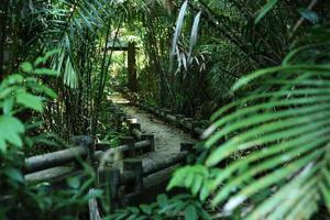 jardim tailandês