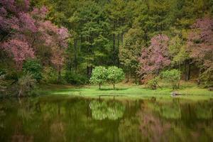 reflexo da árvore do casal no lago