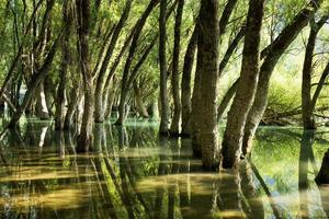 floresta de carvalhos refletida nas águas cristalinas de um lago
