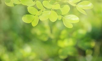 fundo verde natural de foco suave. foto