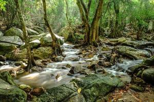 cachoeira e floresta tropical foto