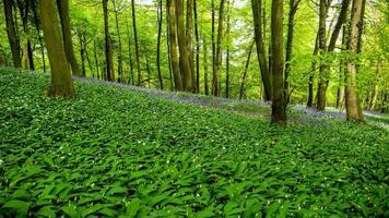 árvores e cores da floresta