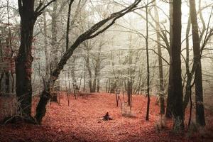 manhã fria e nevoeiro no final do outono na floresta foto