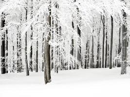 todos os ramos brancos