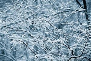 primeiros galhos cobertos de neve foto